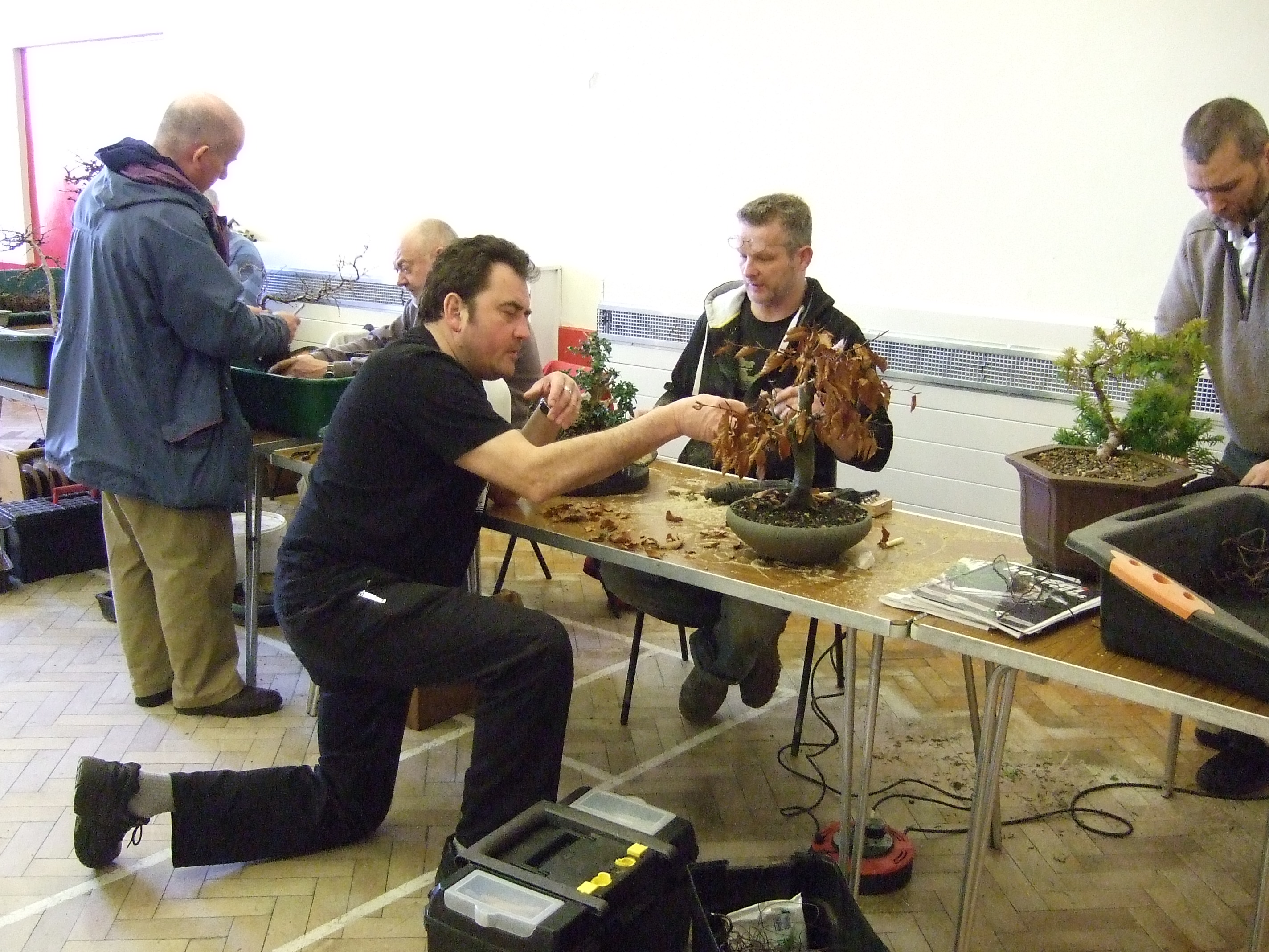 wessex bonsai sunday workshops