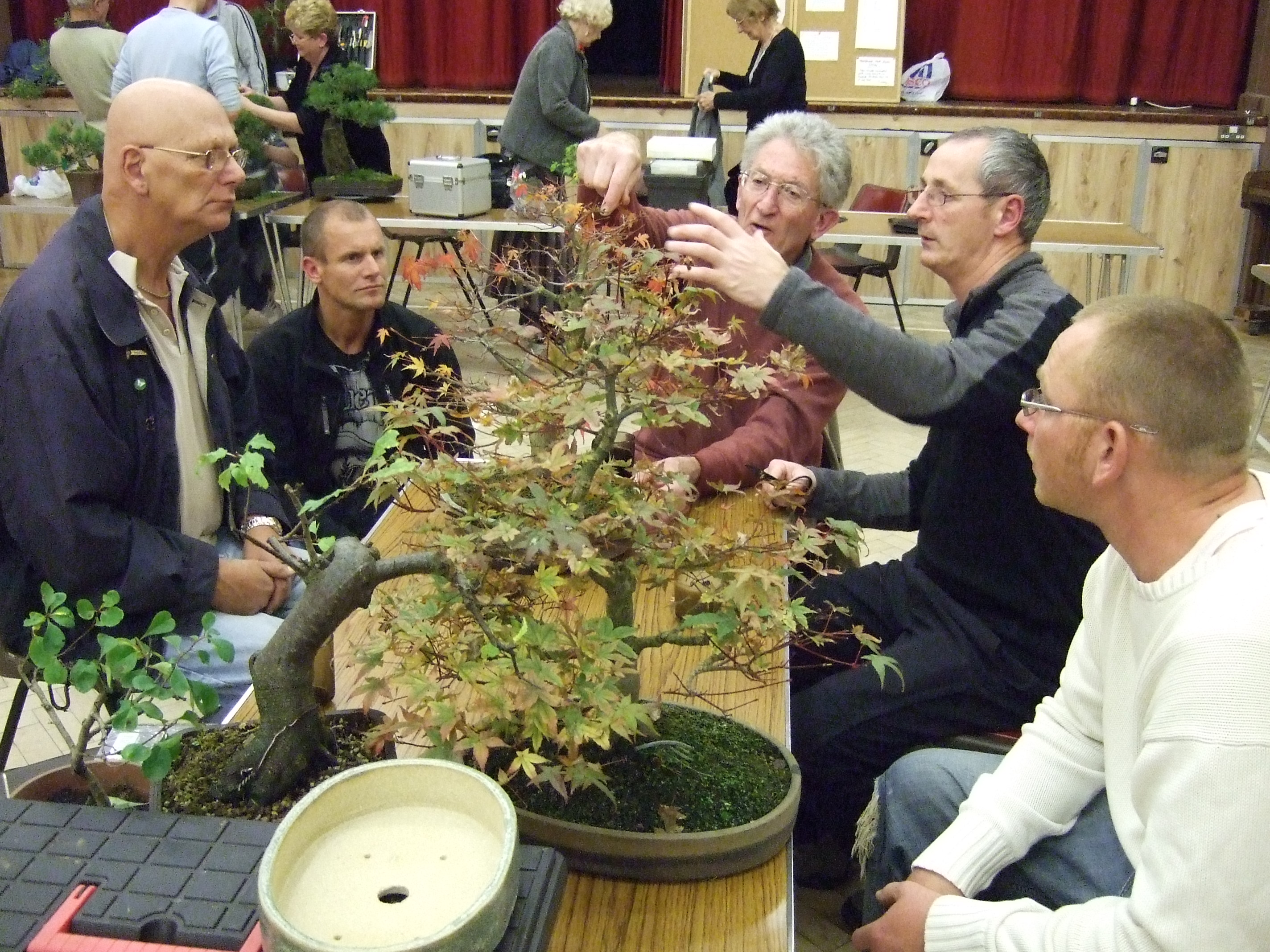 weseex bonsai society workshops
