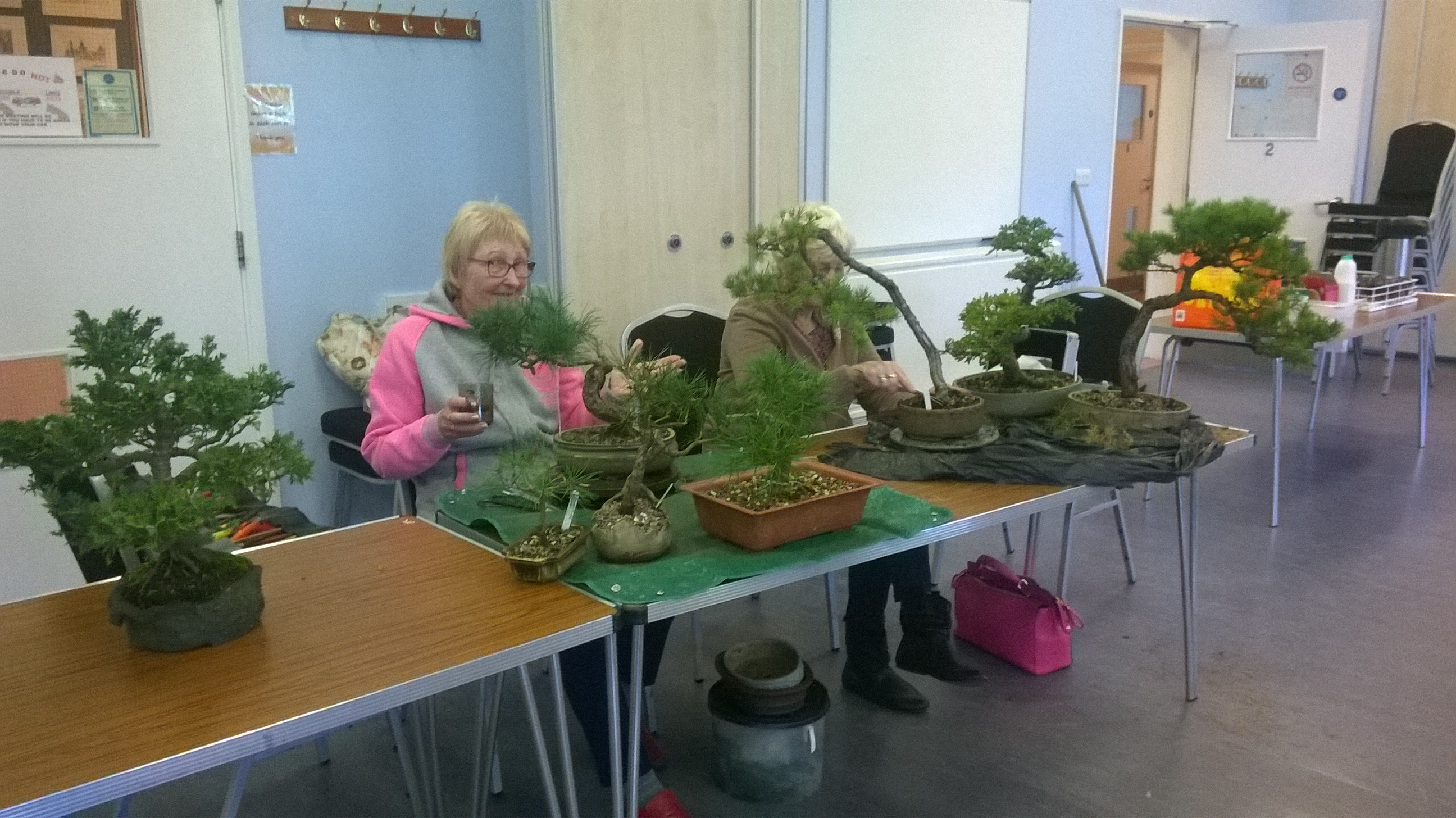 Wessex Bonsai Sunday Workshop