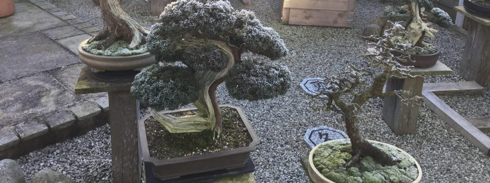 wessex bonsai society 2016