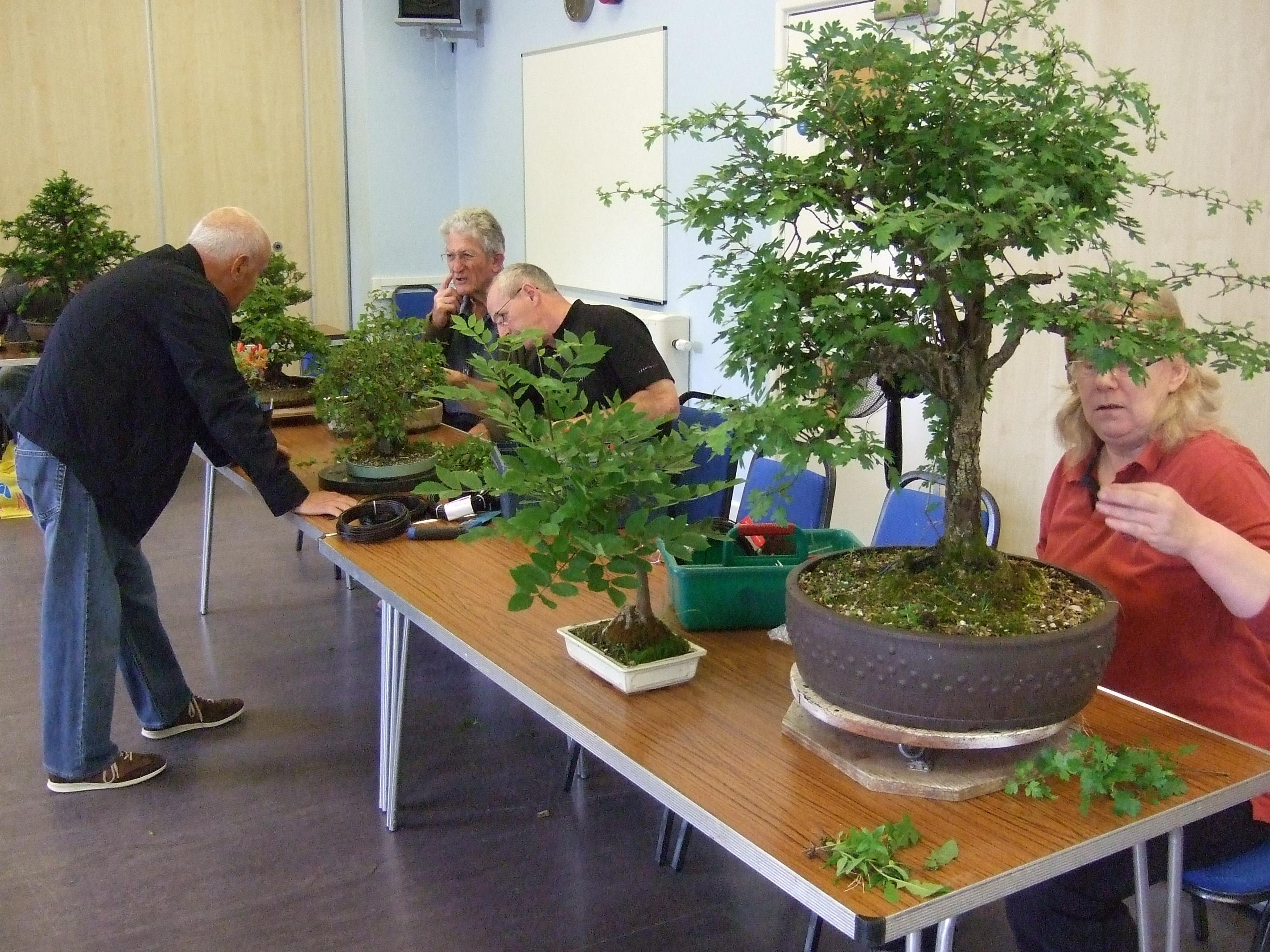 Wessex Bonsai Tree Workshops