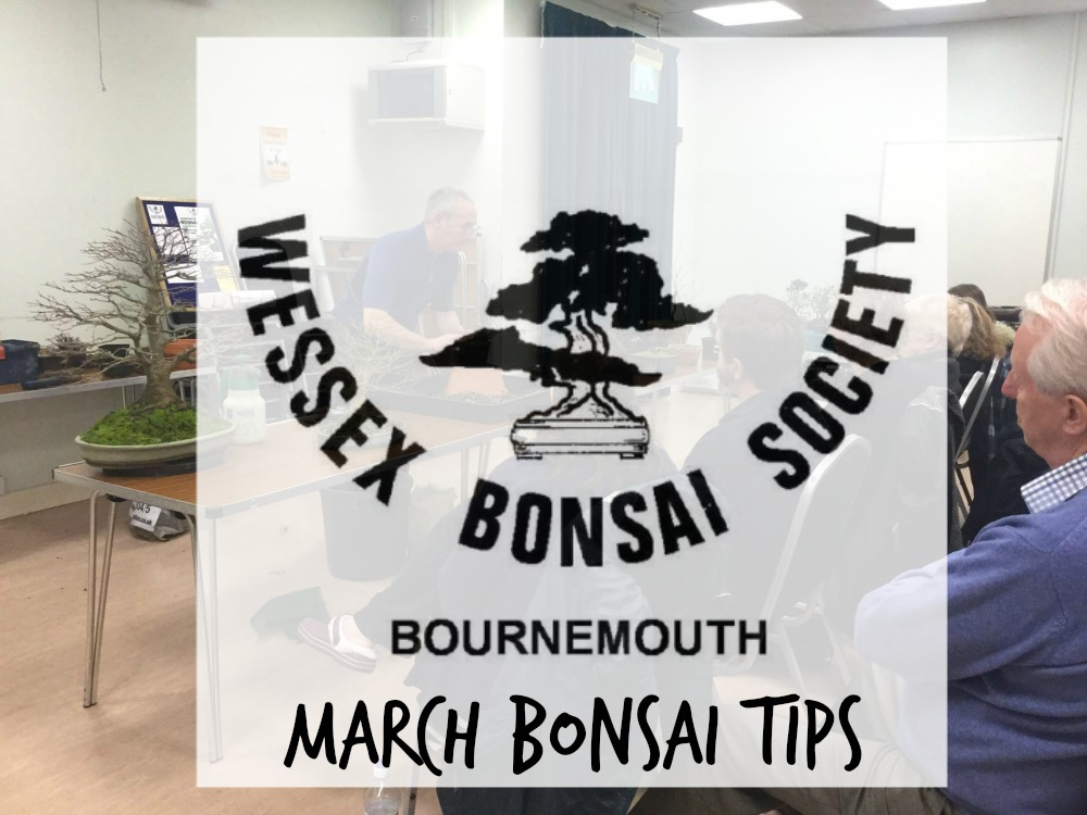 march bonsai tips