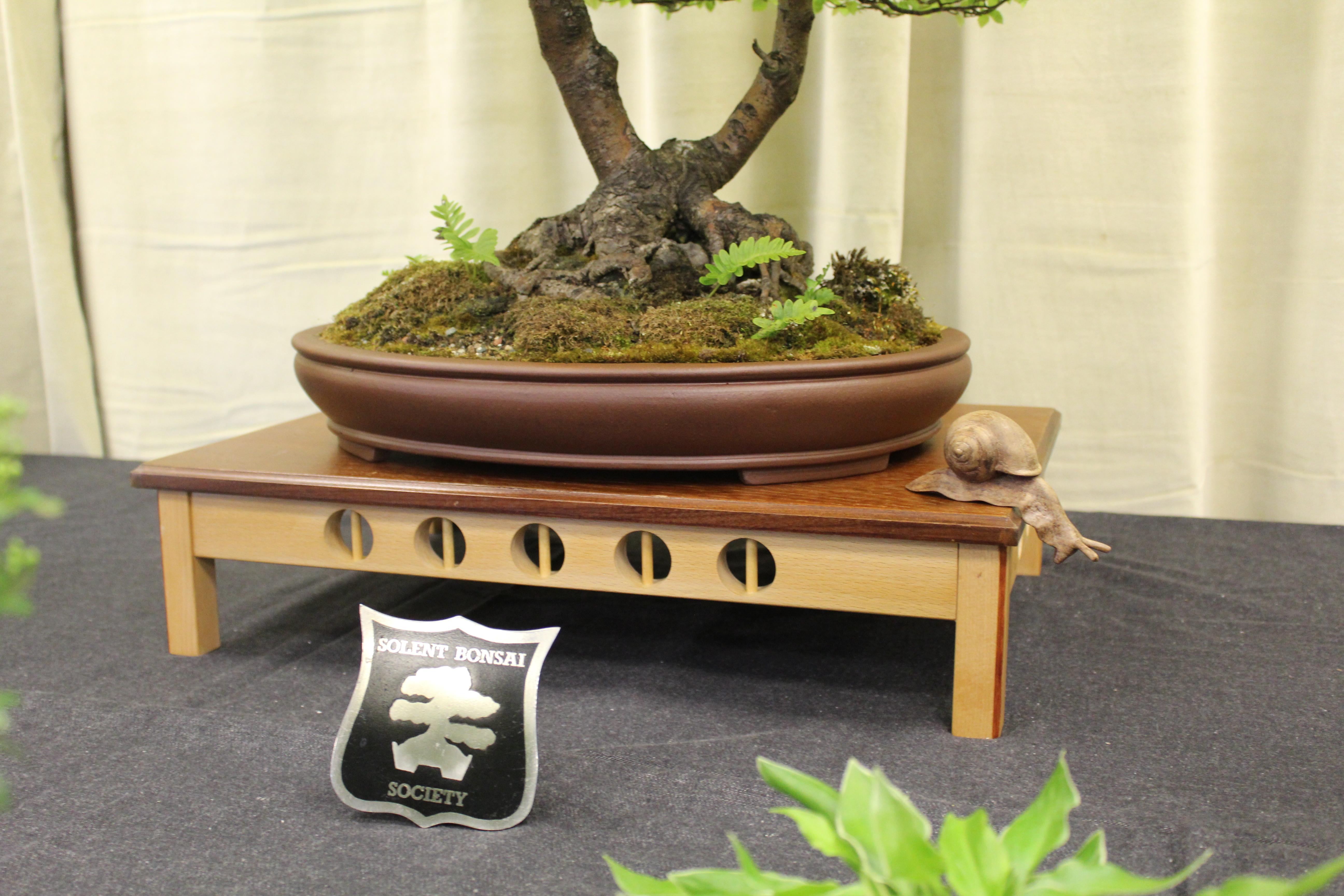 solent bonsai