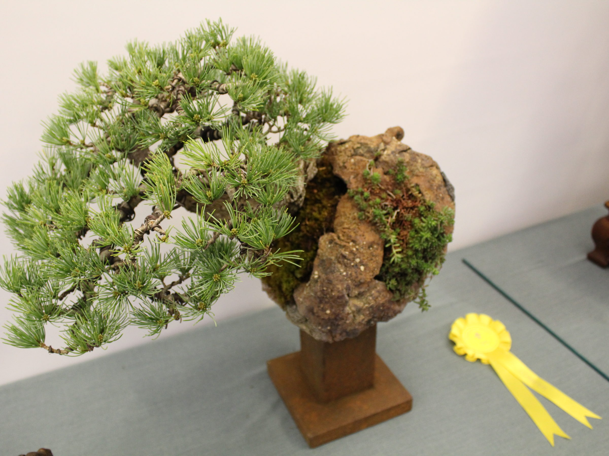 Award winning pines