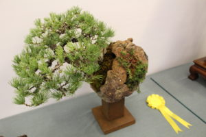 Award winning pines