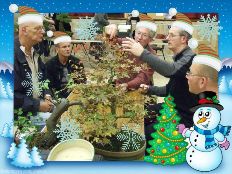 Christmas December bonsai tips