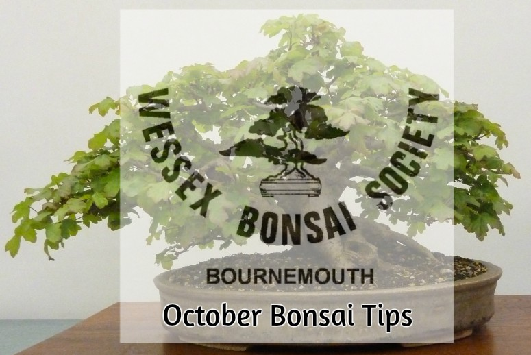October bonsai tips