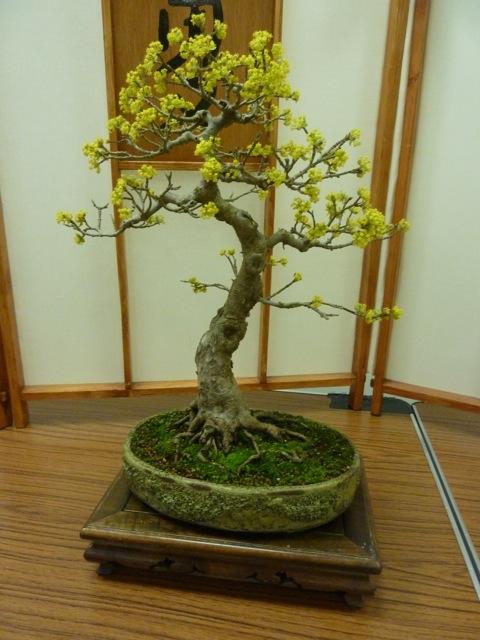 gary conrus tree of the month